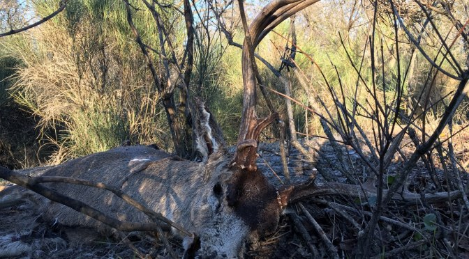 Death Of A Blacktail