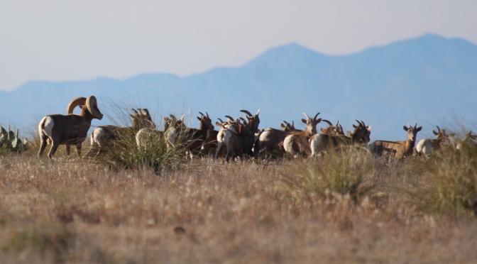 The Wildlife Of Elephant Mountain